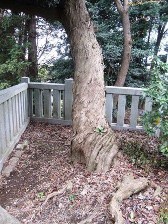 五霊神社境内の木
