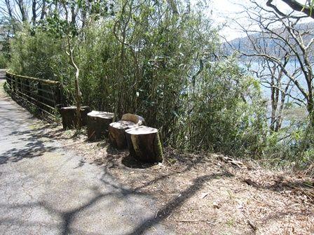 箱根湖畔の九頭龍神社への道