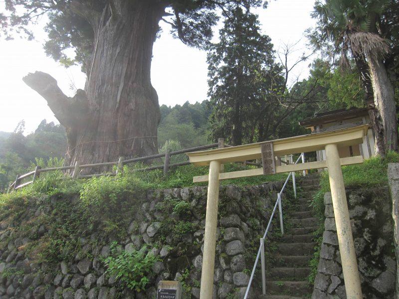 中川の箒杉、熊野神社